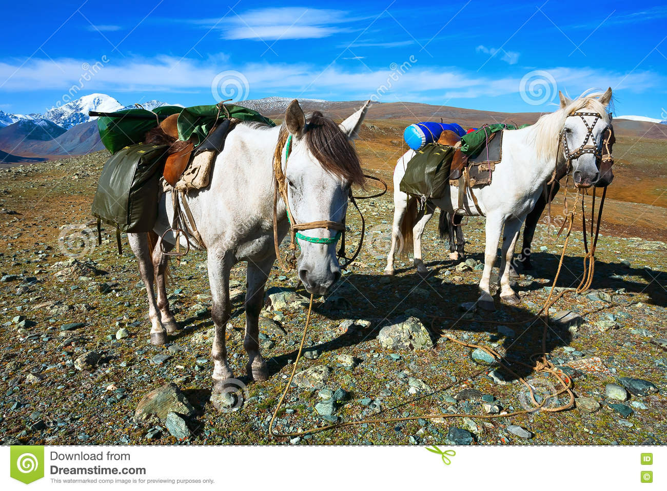 White Horse With A Load On Top Of The Mountain Stock Photo Image Of Nature Heavy 78859930
