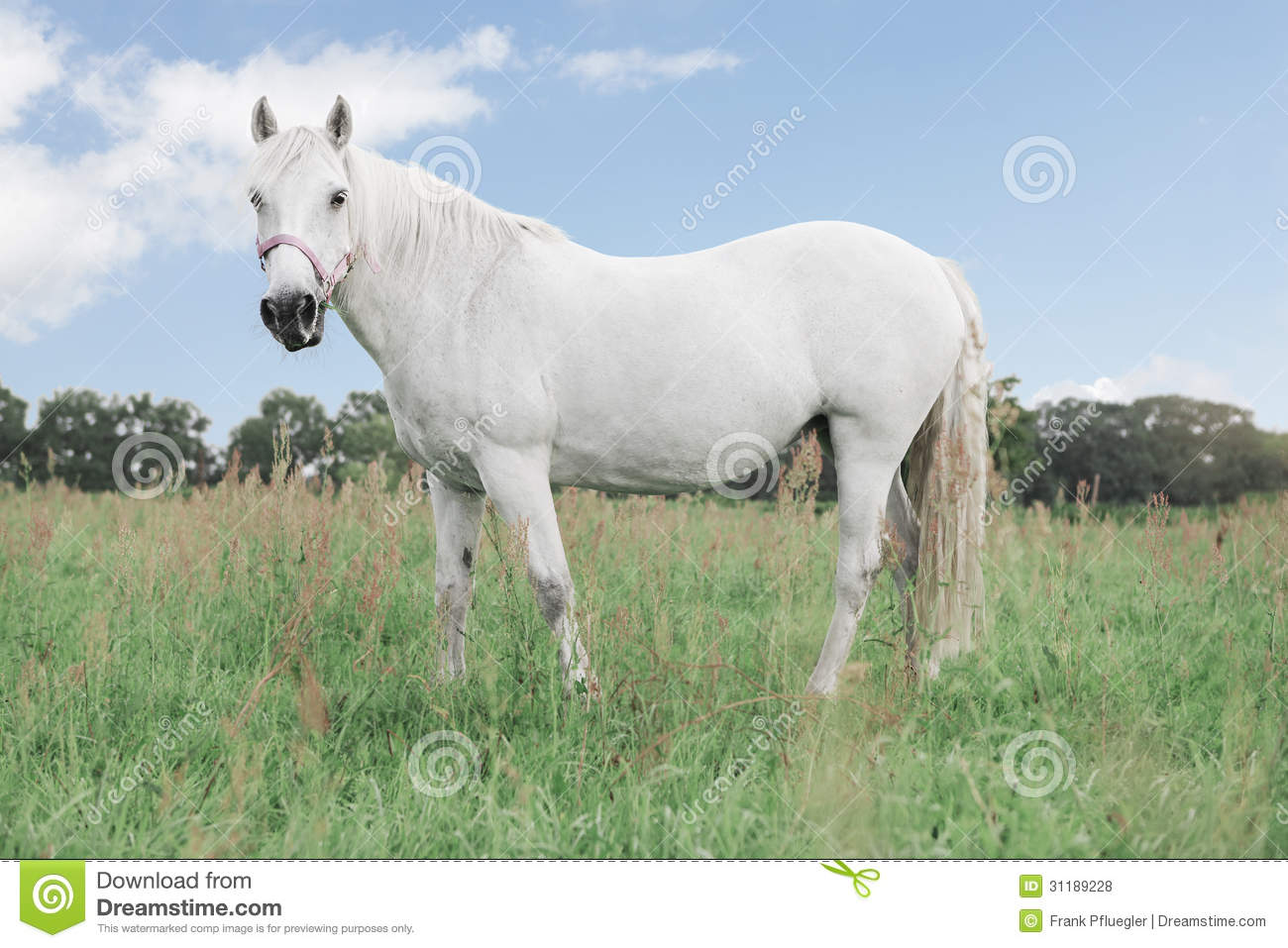 Beautiful White Horse Standing On Horizon Stock Image ... |White Horse Standing Up