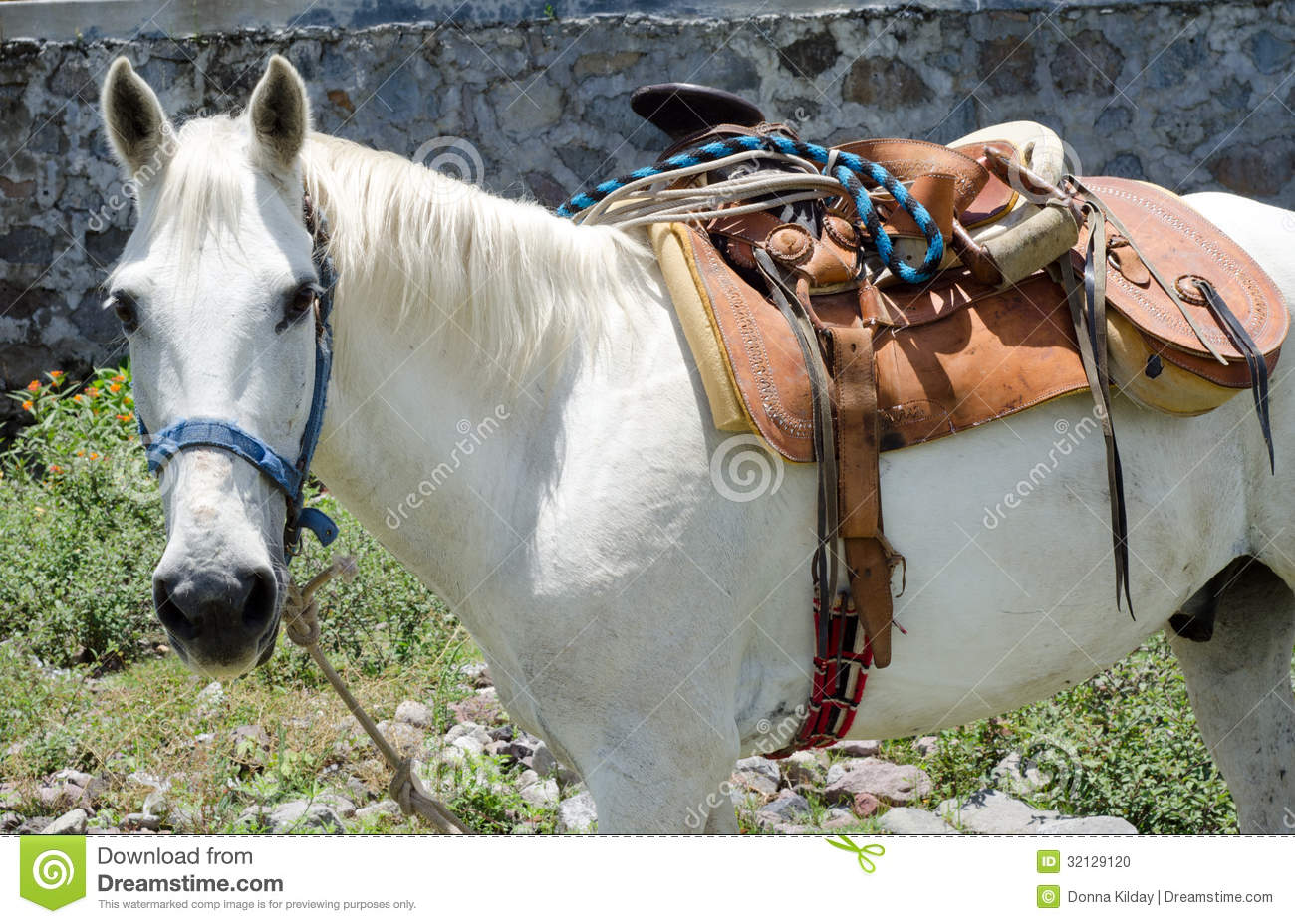 White horse with mexican saddle stock photo image 32129120 for Sillas para caballos