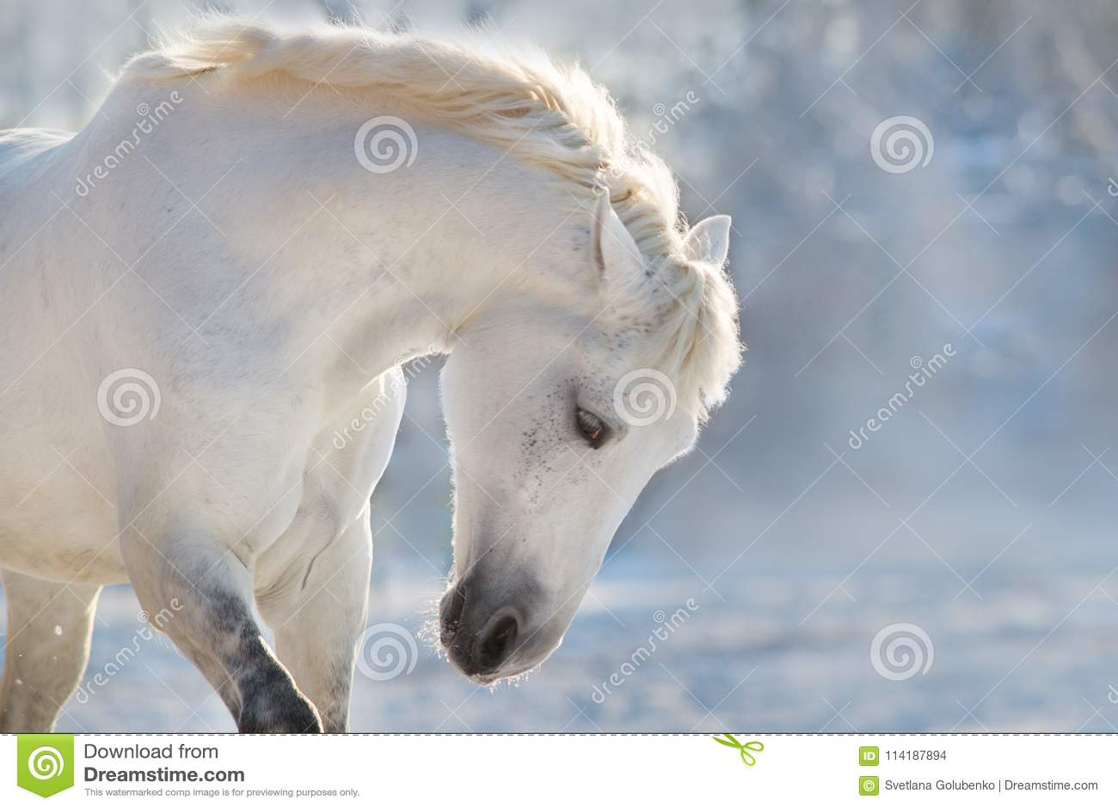White Horse Portrait Stock Photo Image Of Field Nature 114187894