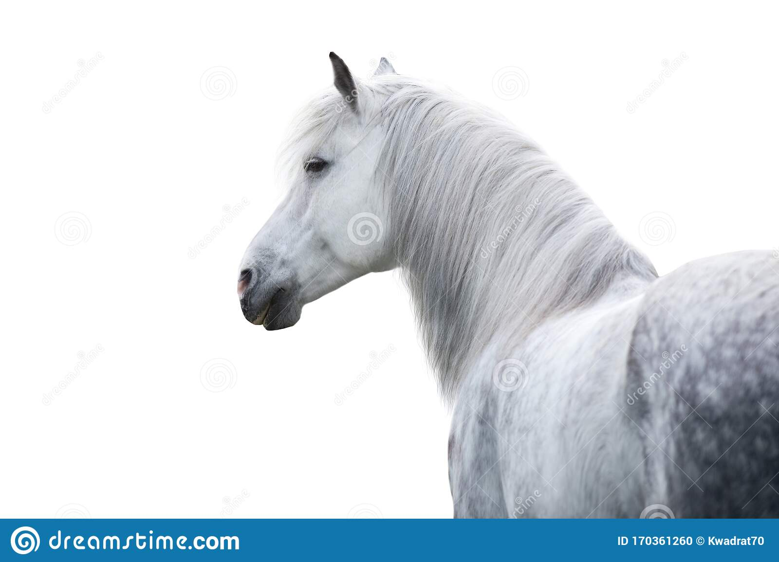 44 633 White Horse Portrait Photos Free Royalty Free Stock Photos From Dreamstime