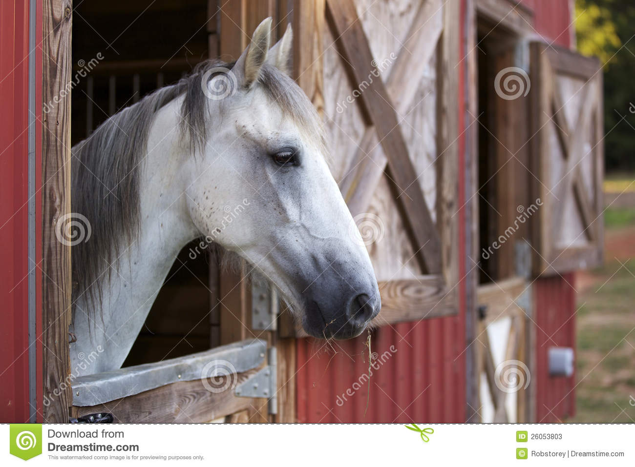 White Horse In Red Barn Stock Photos Image 26053803