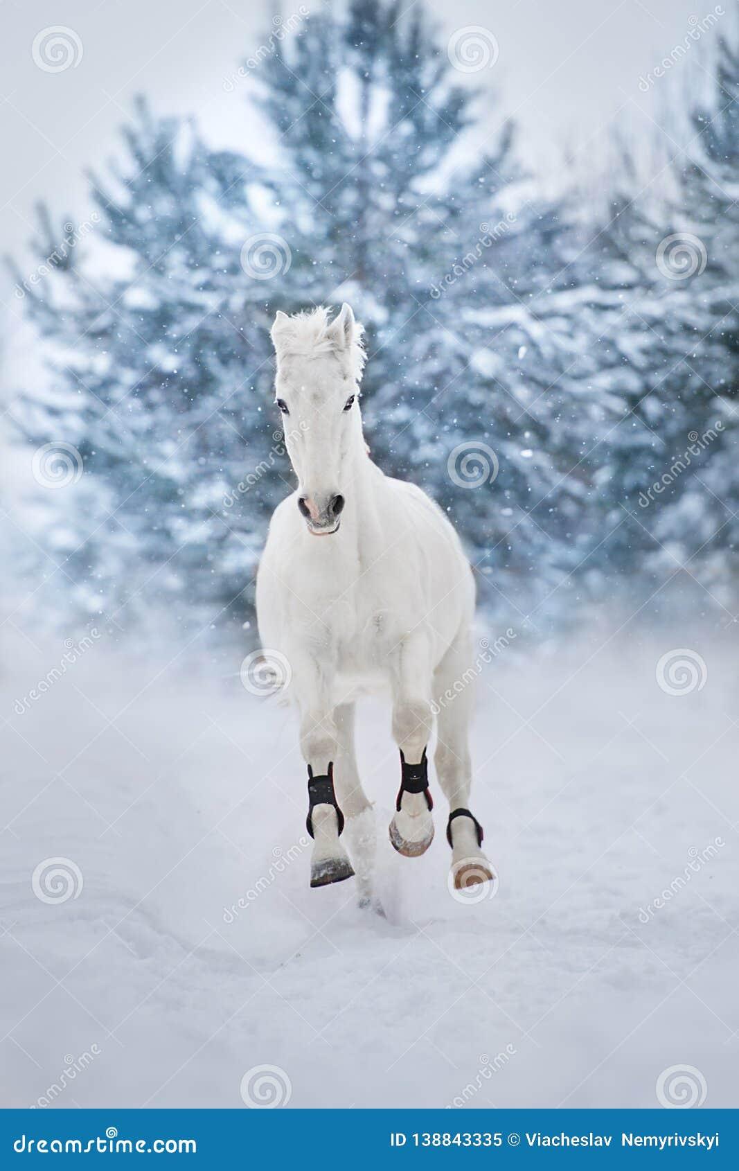 horse run in snow