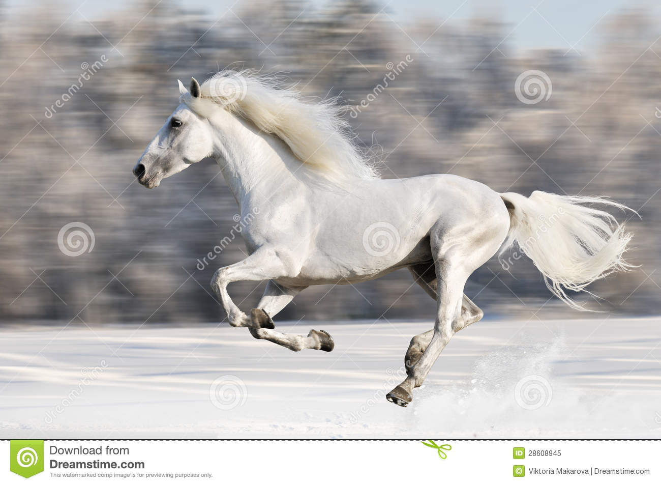 White Horse Runs Gallop In Winter Blur Motion Stock Image Image Of Horse Equine 28608945