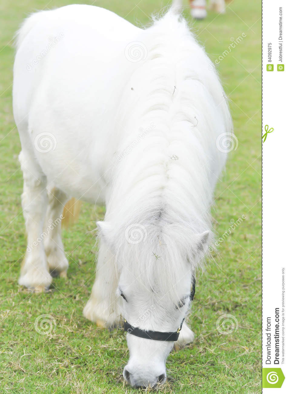 White horse`s eating some grass on the farm