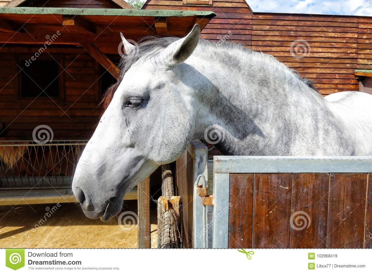 White Horse In The Stable Stock Image Image Of Stallion 102968419