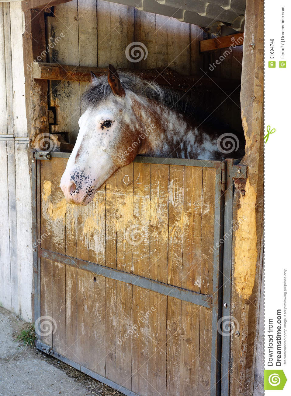 White Horse In Stall Royalty Free Stock Photos Image
