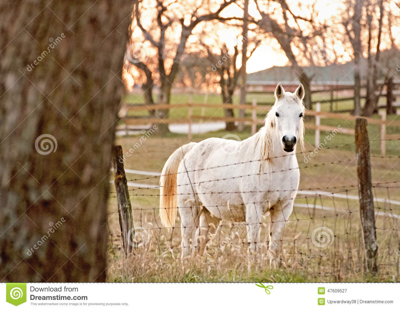 Standing White Horse
