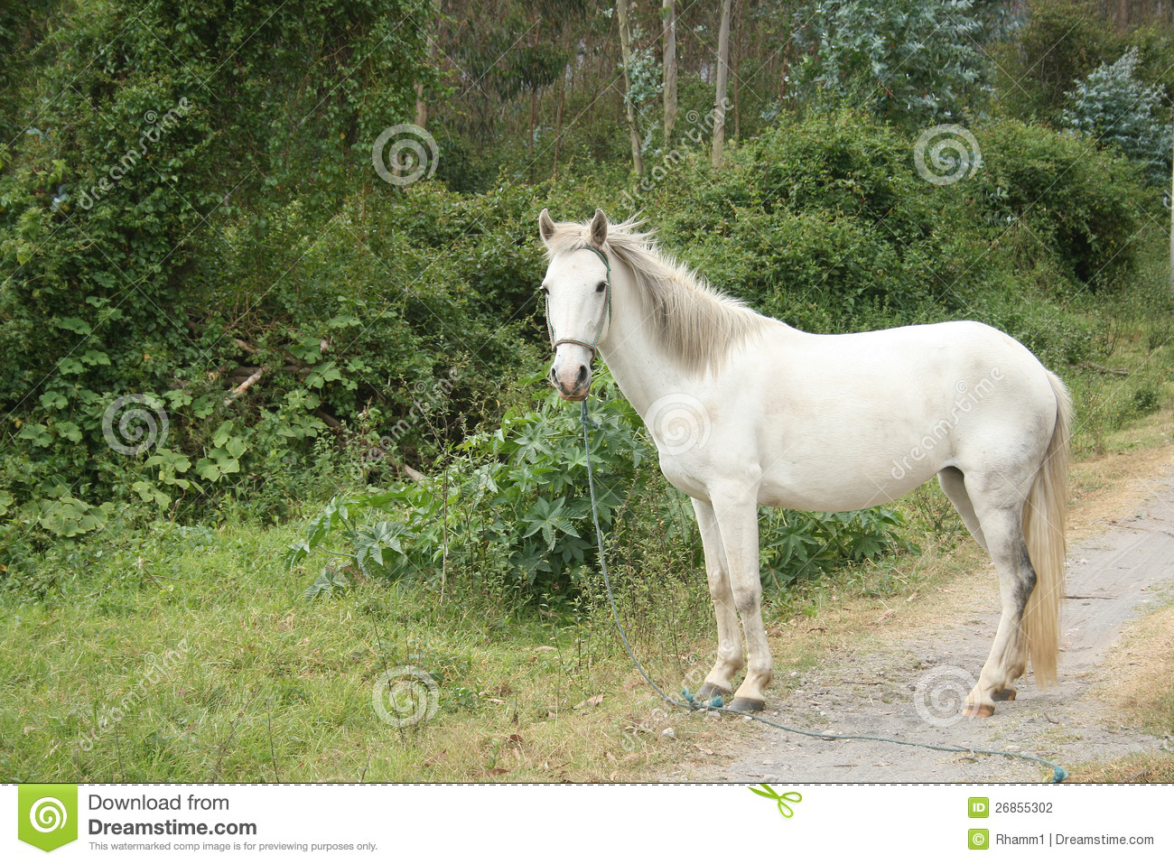 Horse Standing Up | Camera: Ben (my Nikon d60) Lens: 70mm ... |White Horse Standing Up