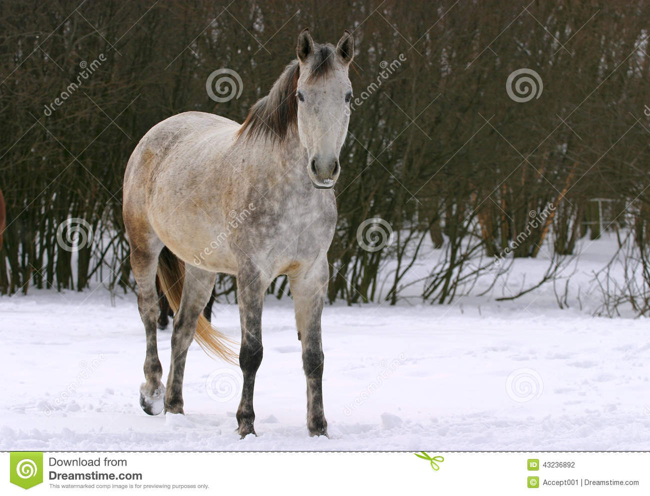 Nice Horse Standing In Front Of Nature Background Royalty