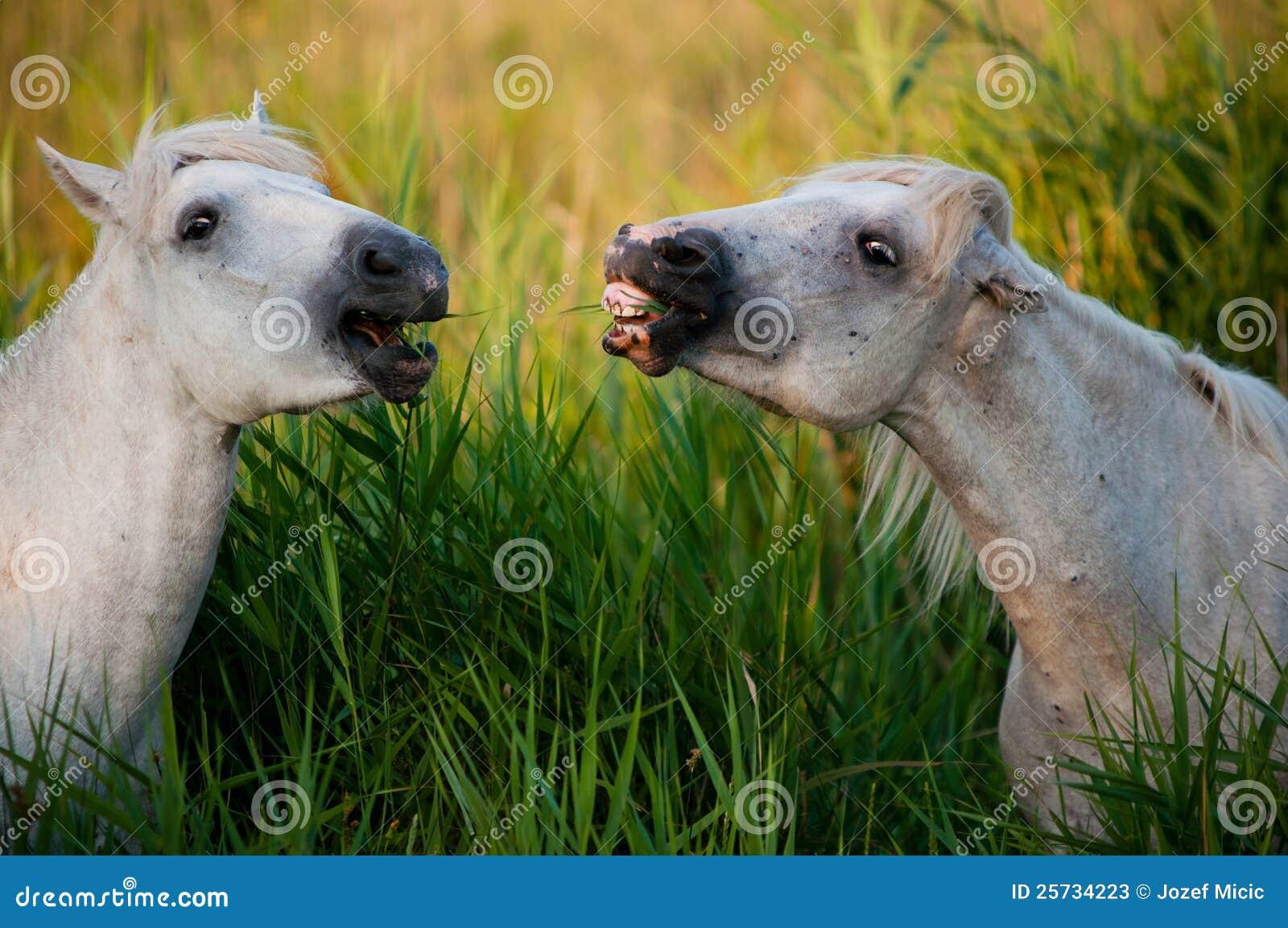 White horse eating grass - photo#19