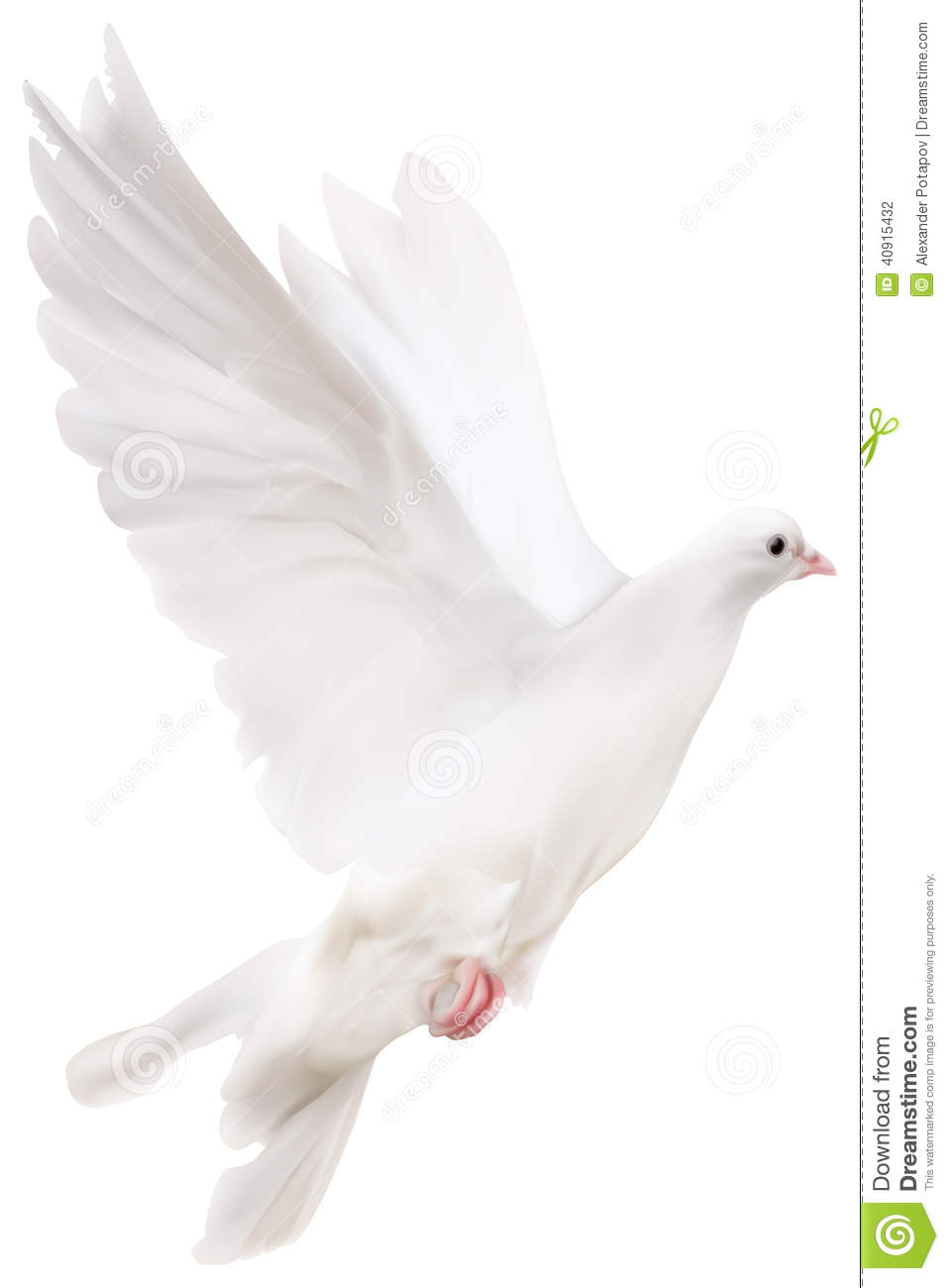 Pigeon illustration - photo#13