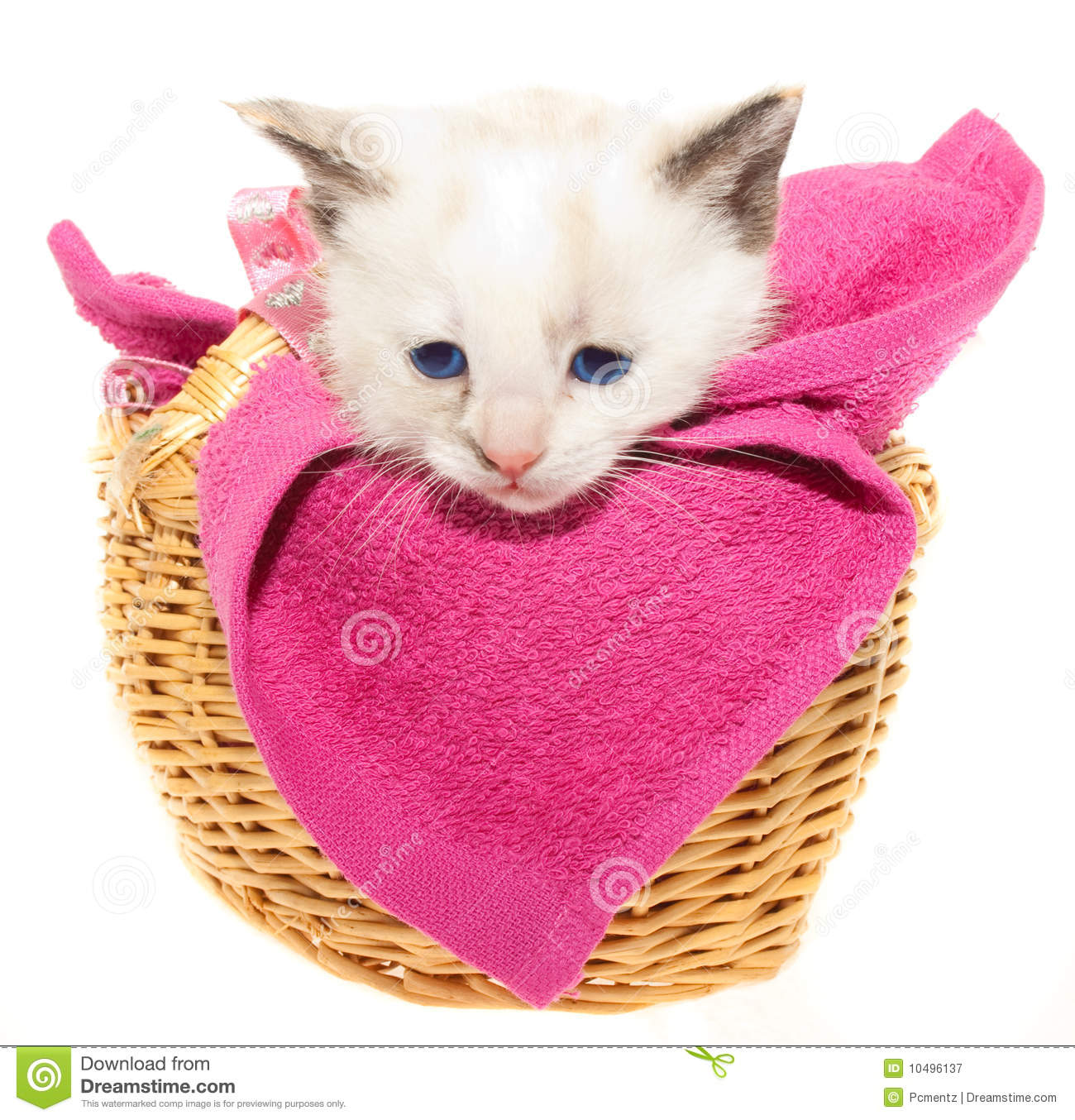 White Kitten In A Basket Royalty Free Stock Photography ...