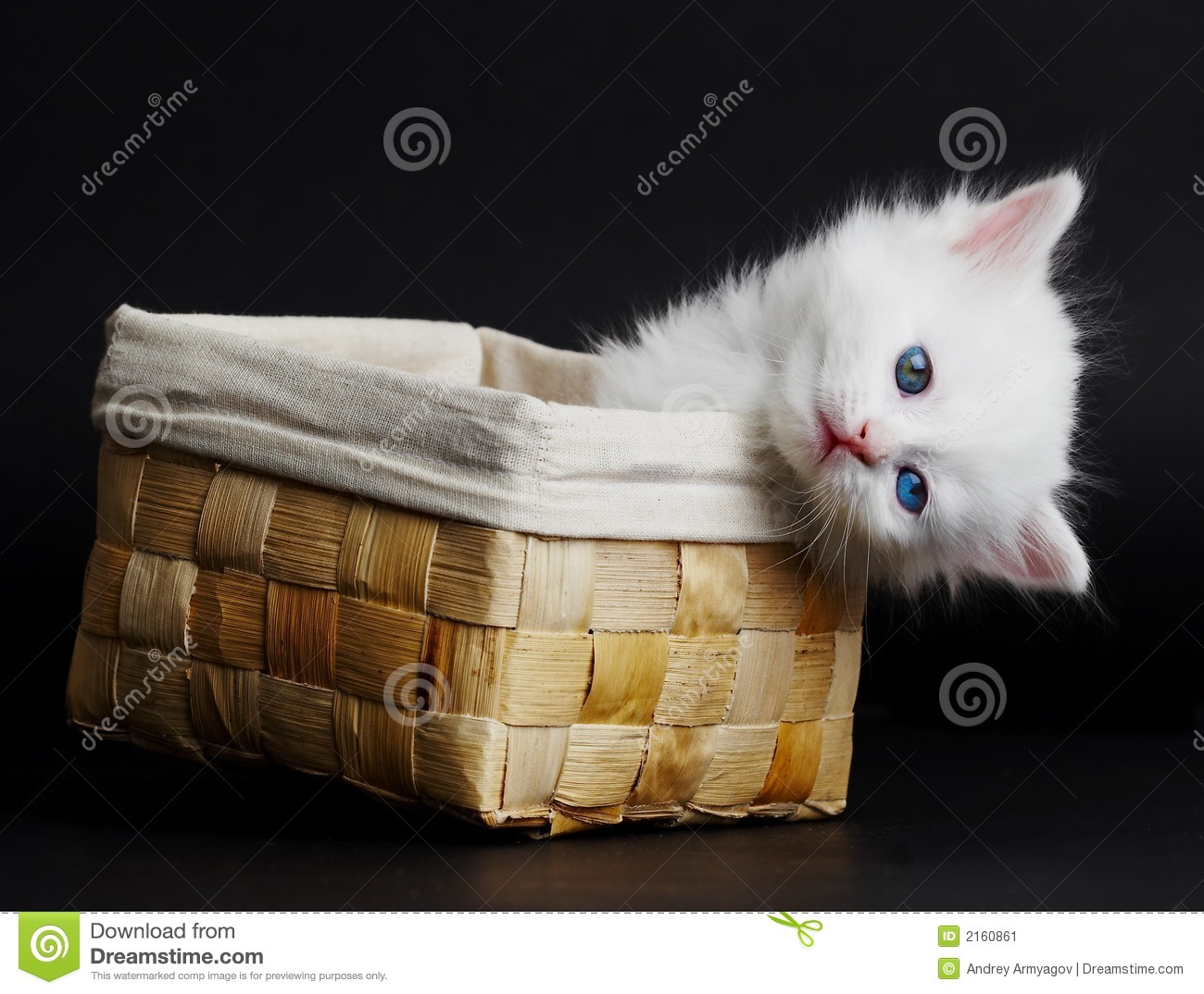 White Kitten In A Basket. Stock Image - Image: 2160861