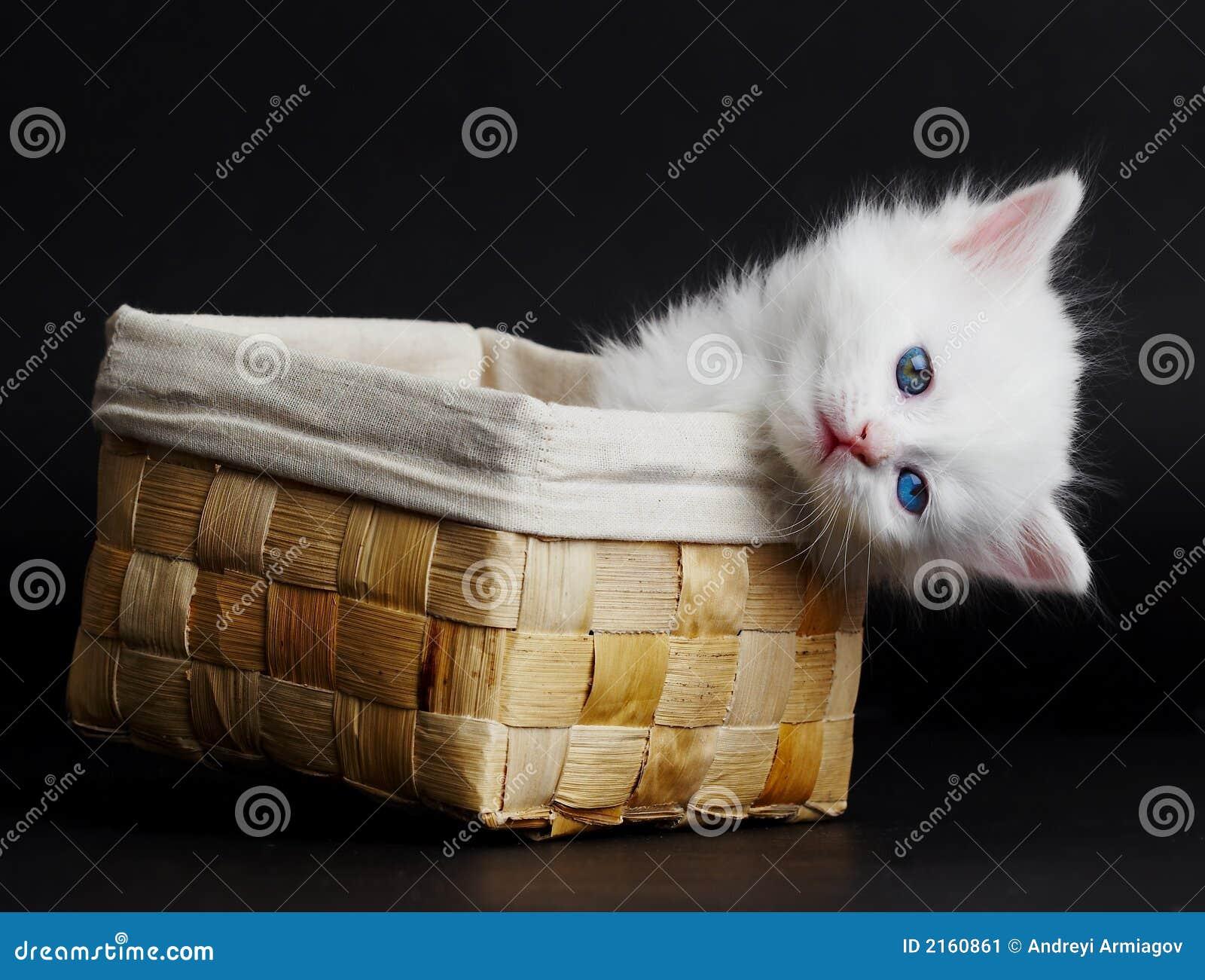 White Kitten In A Basket. Stock Image - Image: 2160861
