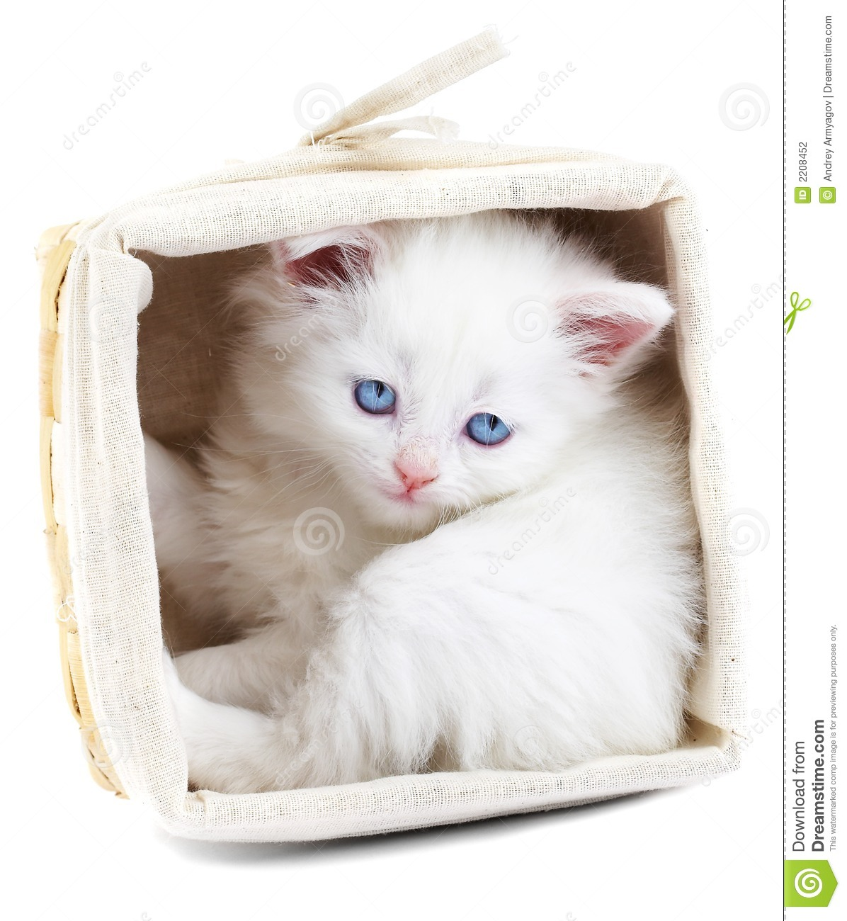 White Kitten In A Basket. Stock Photography - Image: 2208452