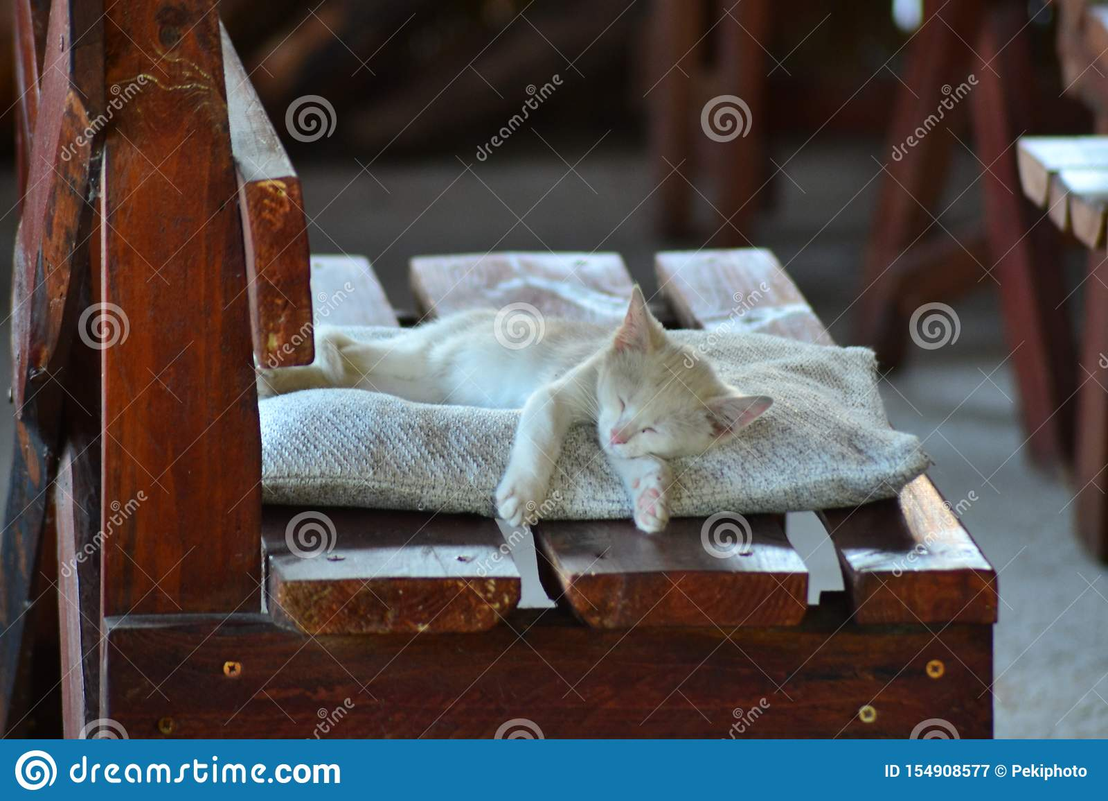 white Kitten dreaming peacefully
