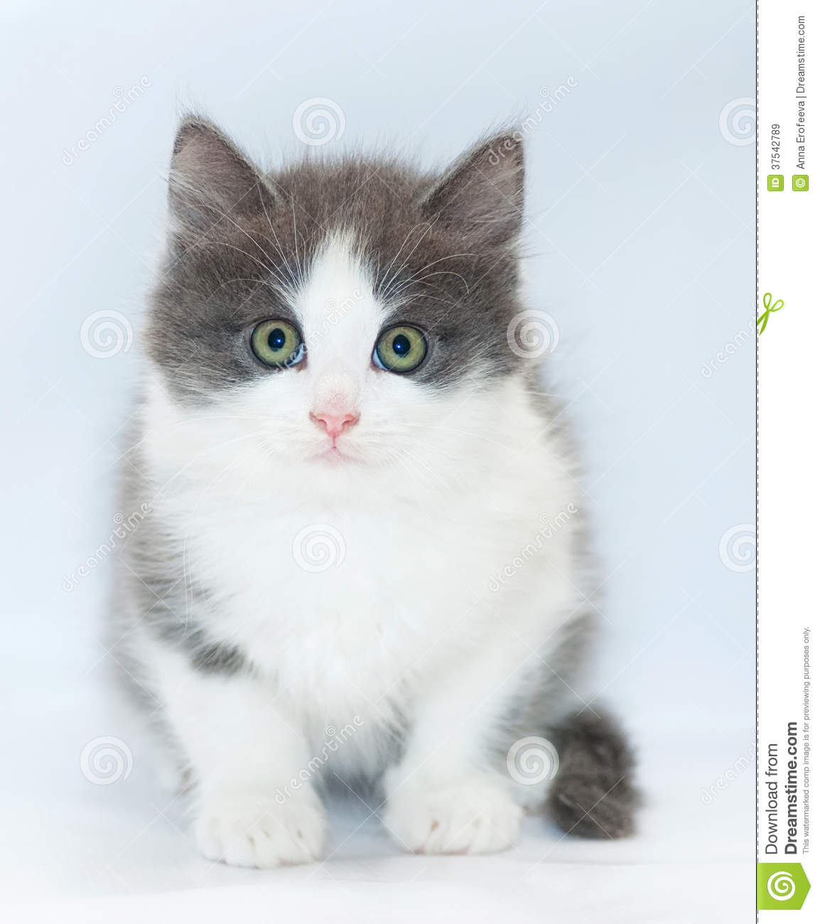 The Lost Kittens - Warrior Cats Online Gray And White Cat With Green Eyes