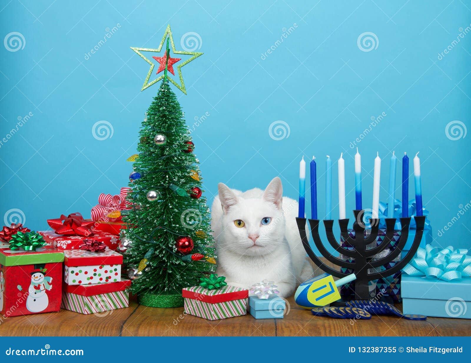 Christmas Hannakah.White Kitten Laying Between Christmas And Hanukkah