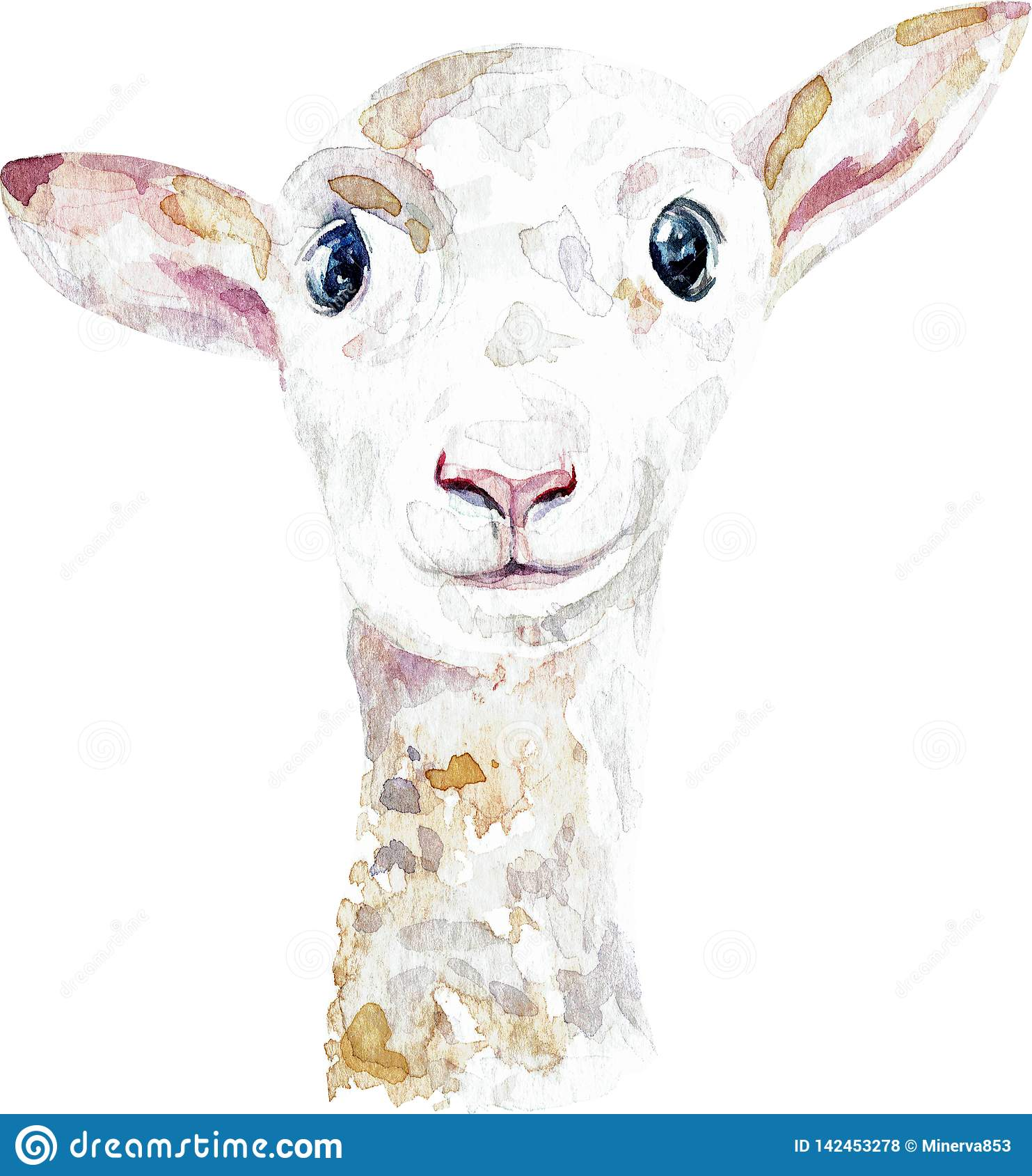 White lamb. Close-up of ship head. Watercolor illustration isolated on white background