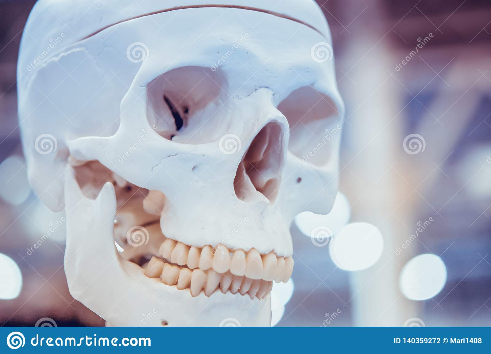 White layout human skull closeup, medical exhibit
