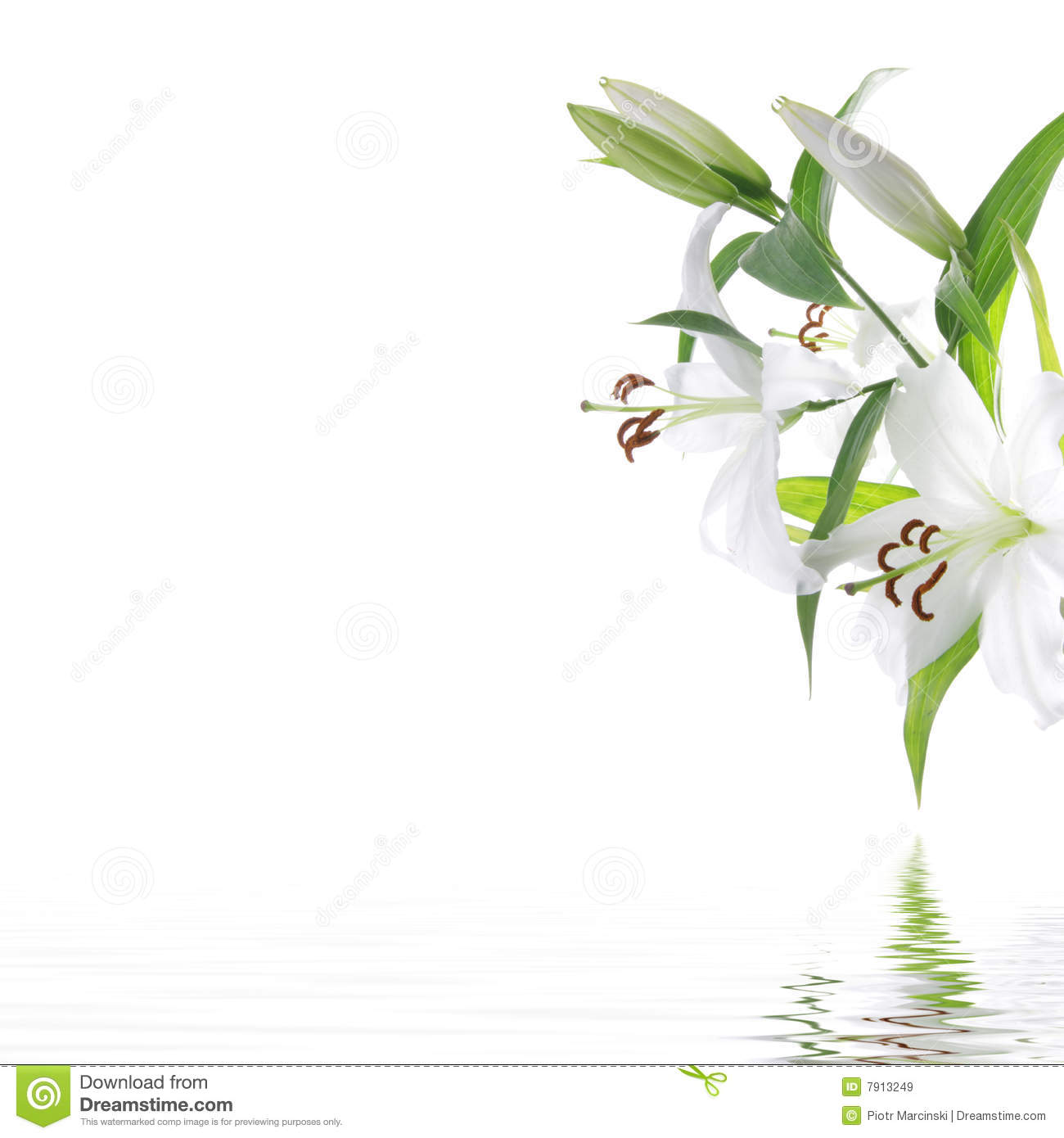 White Lilium Flower - SPA Design Background Royalty Free Stock Images ...