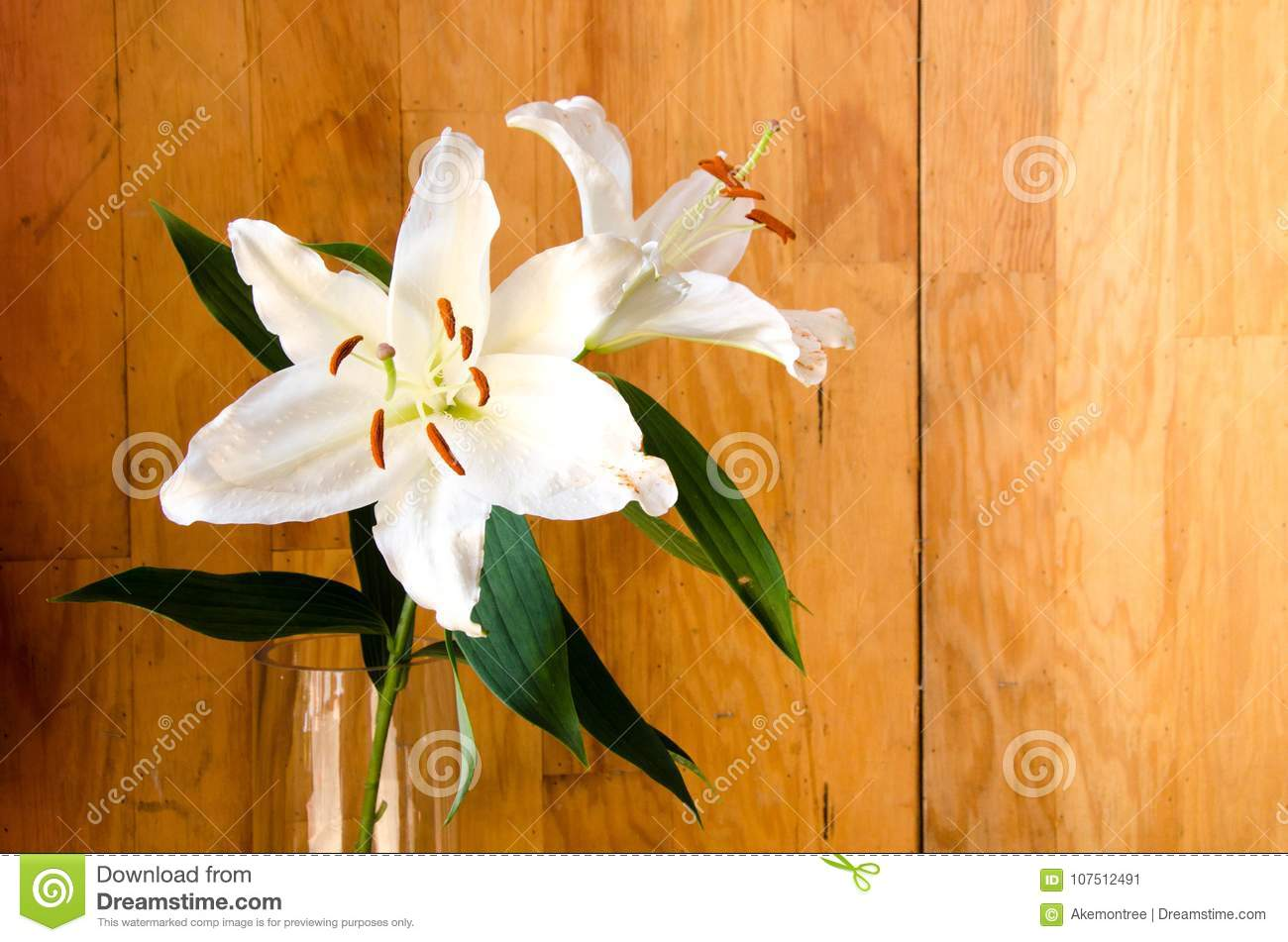 White lilly flower in transparent glass on wooden background stock download white lilly flower in transparent glass on wooden background stock image image of bunch izmirmasajfo