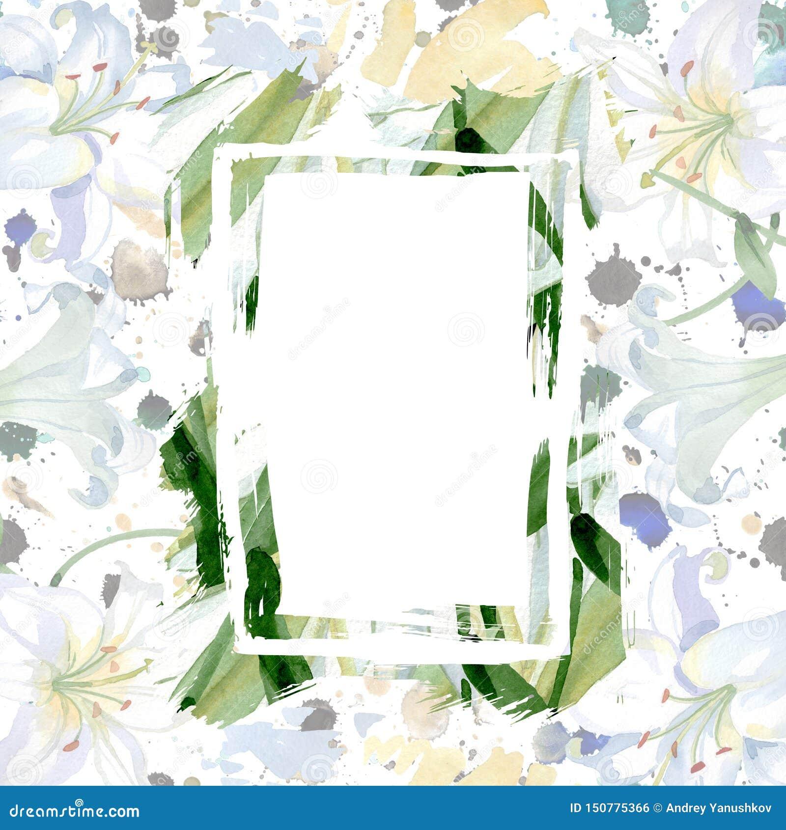 White lily floral botanical flowers. Watercolor background illustration set. Frame border ornament square.