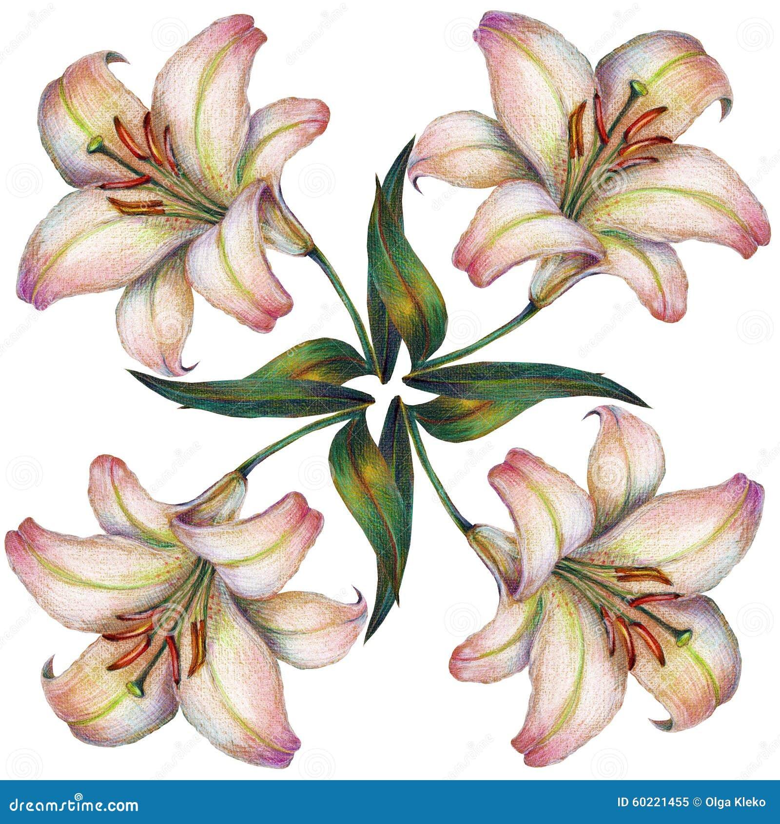 White Lily Flower Color Pencil Illustration Stock Illustration