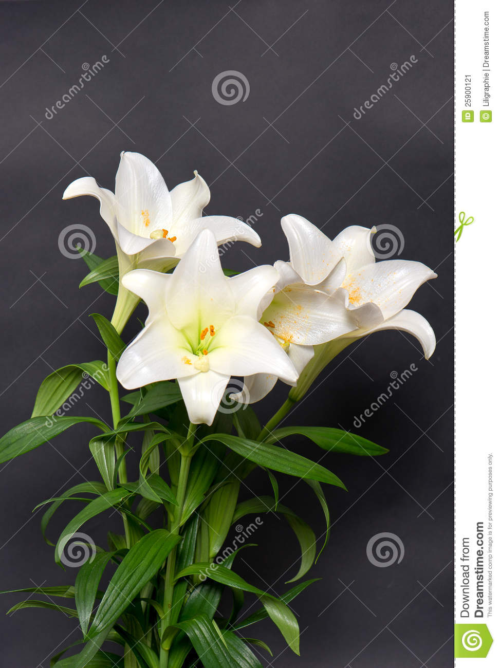 White Lily Flowers Bouquet On Black Stock Image Image Of Lilly