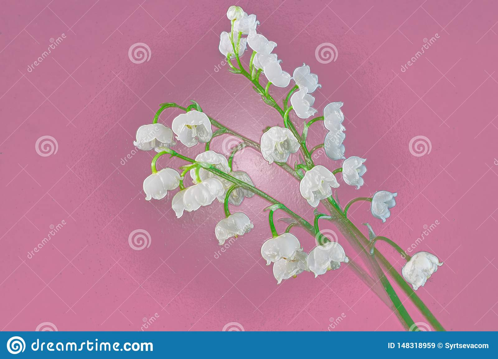 White Lily of the valley close-up on a purple background