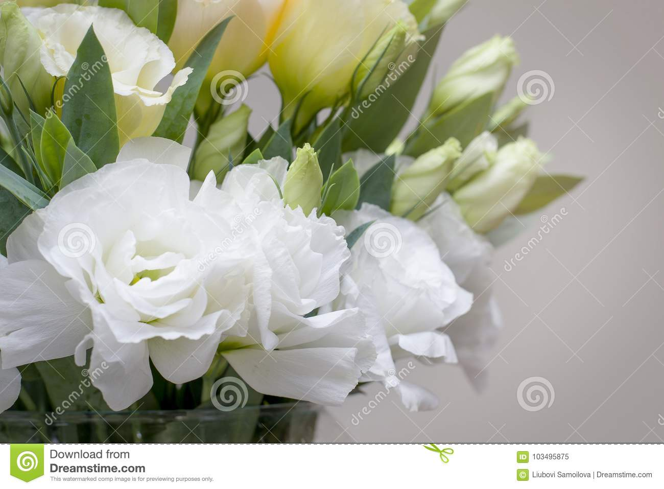 Beautiful White Lisianthus Flowers Look So Much Alike Roses Stock