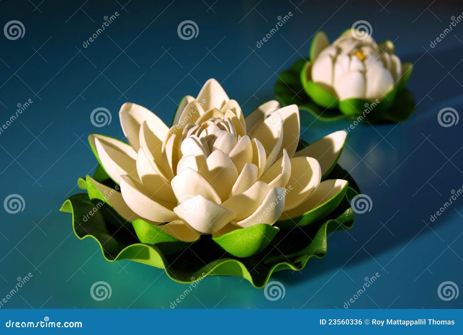 White lotus with bud