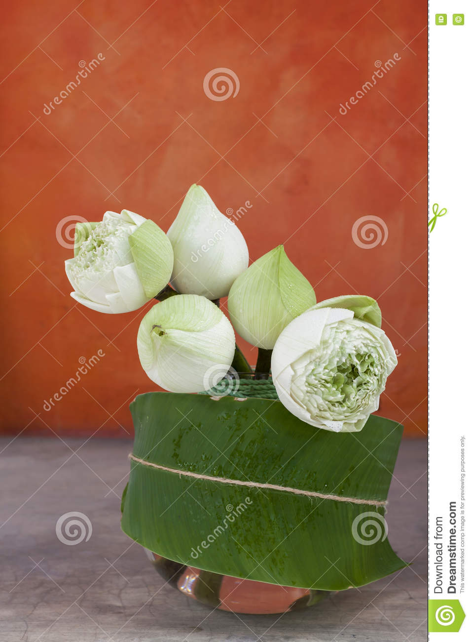 White Lotus Flower Stock Photo Image Of Floral Fresh 77652250