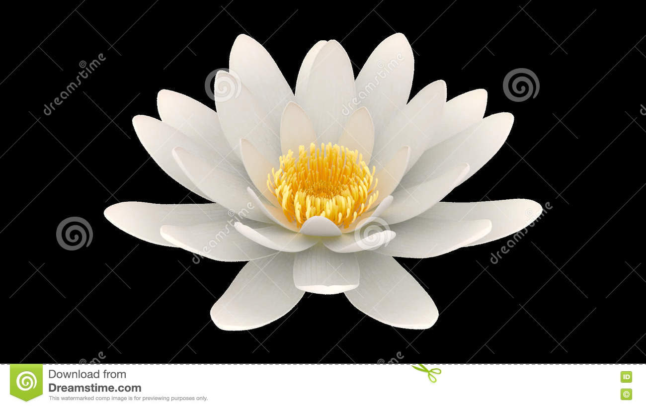 Lotus flower rotating alpha channel stock footage video of asian lotus flower rotating alpha channel stock footage video of asian clean 76717762 izmirmasajfo