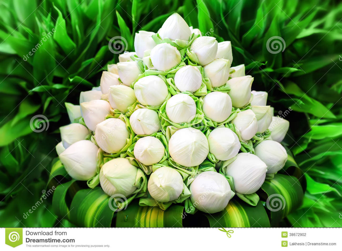 Wedding Bouquets Lotus Flower : White lotus flowers in bouquet stock photography image