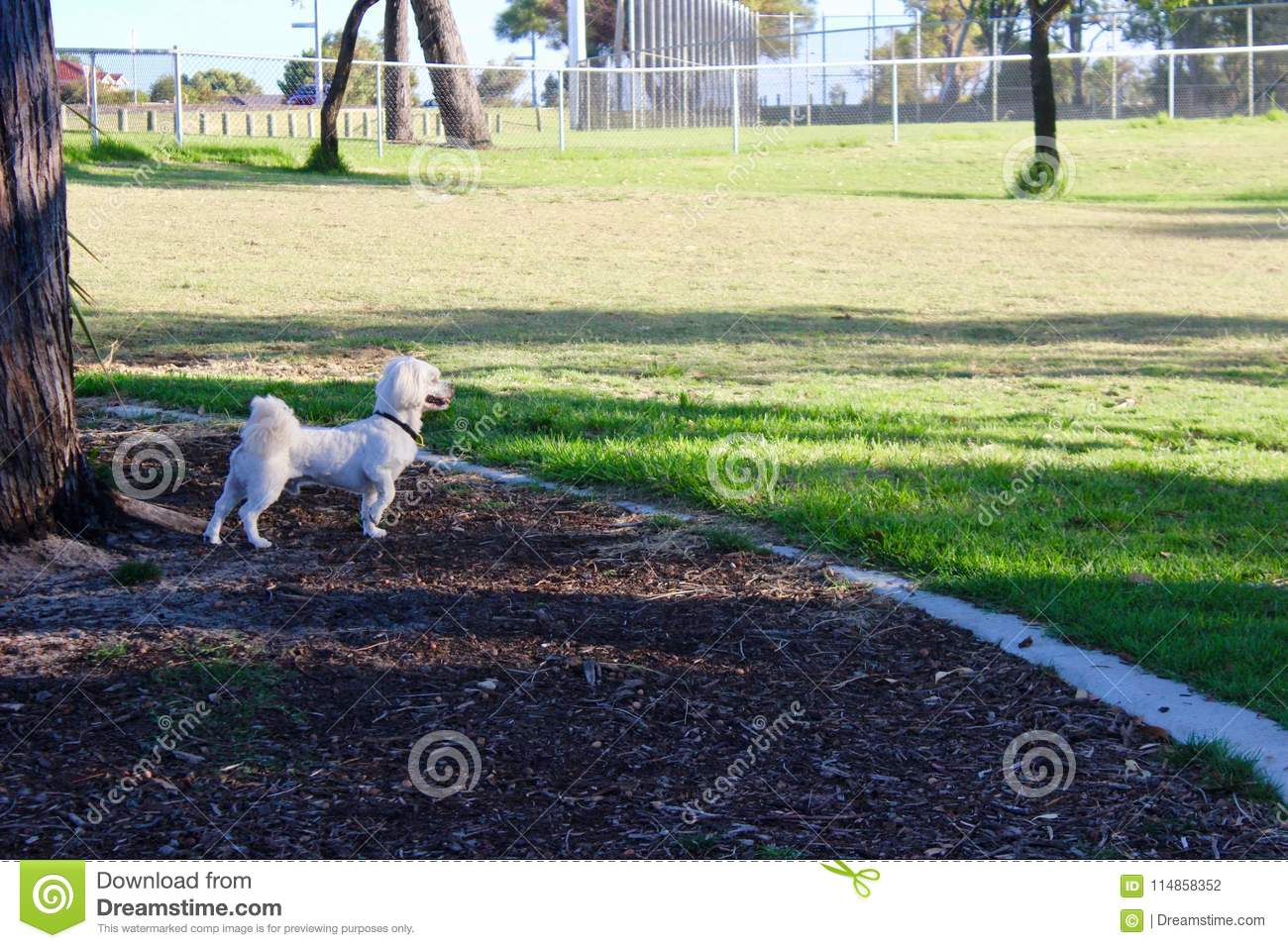 Aesthetic Dog Models At The Park Stock Photo Image Of White Face 114858352