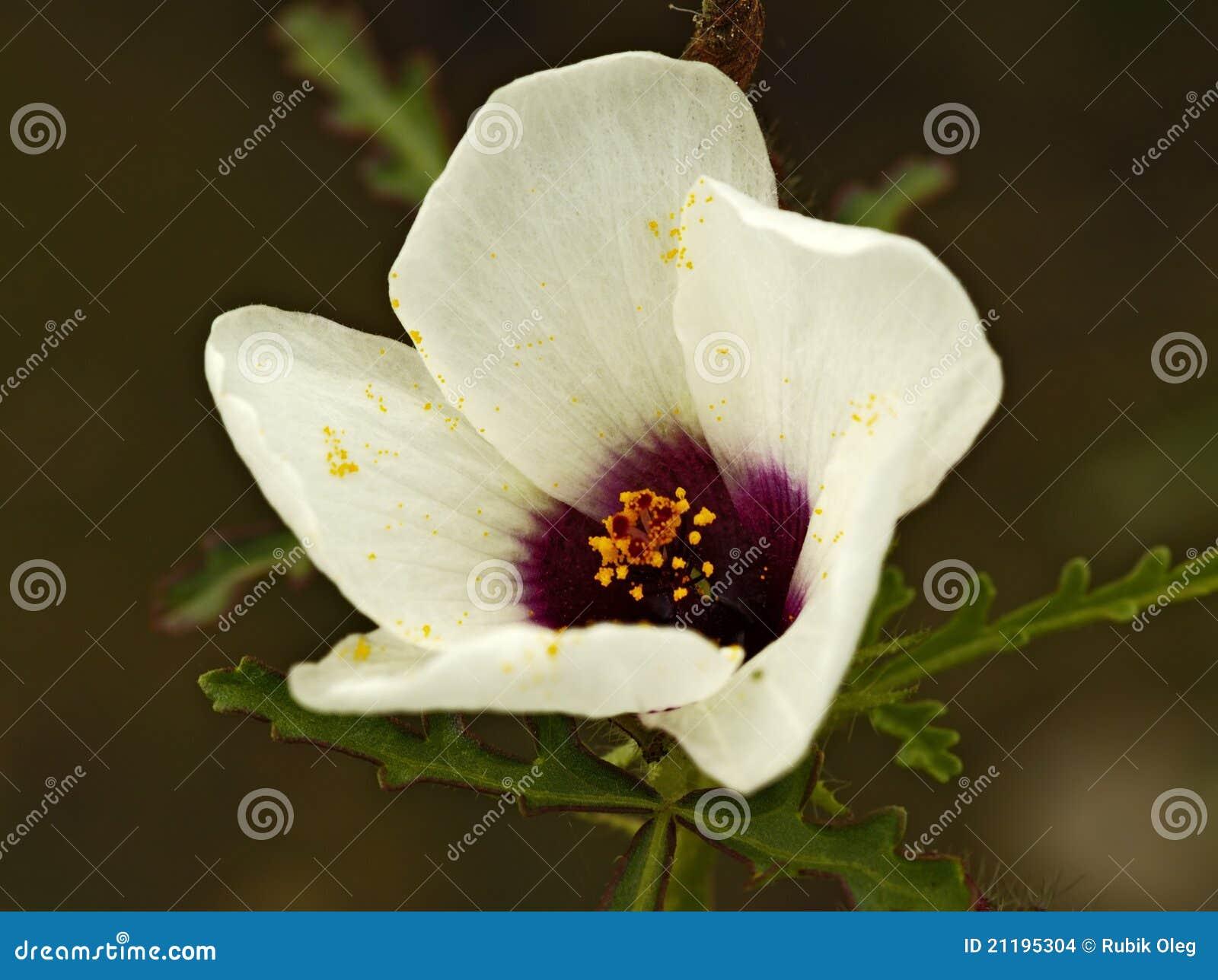 White meadow flower