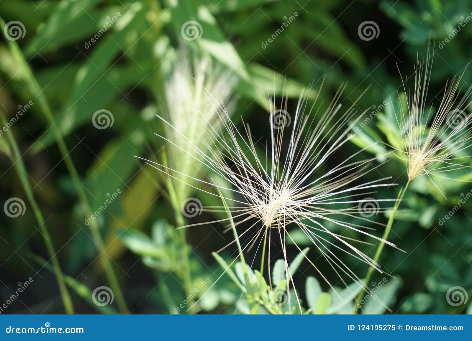 White wildflower grass