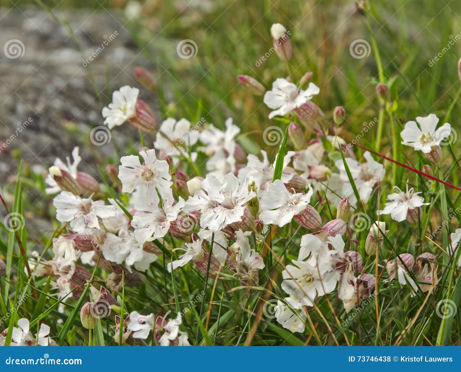White Mountain Flowers Stock Photo Image Of Mountains 73746438