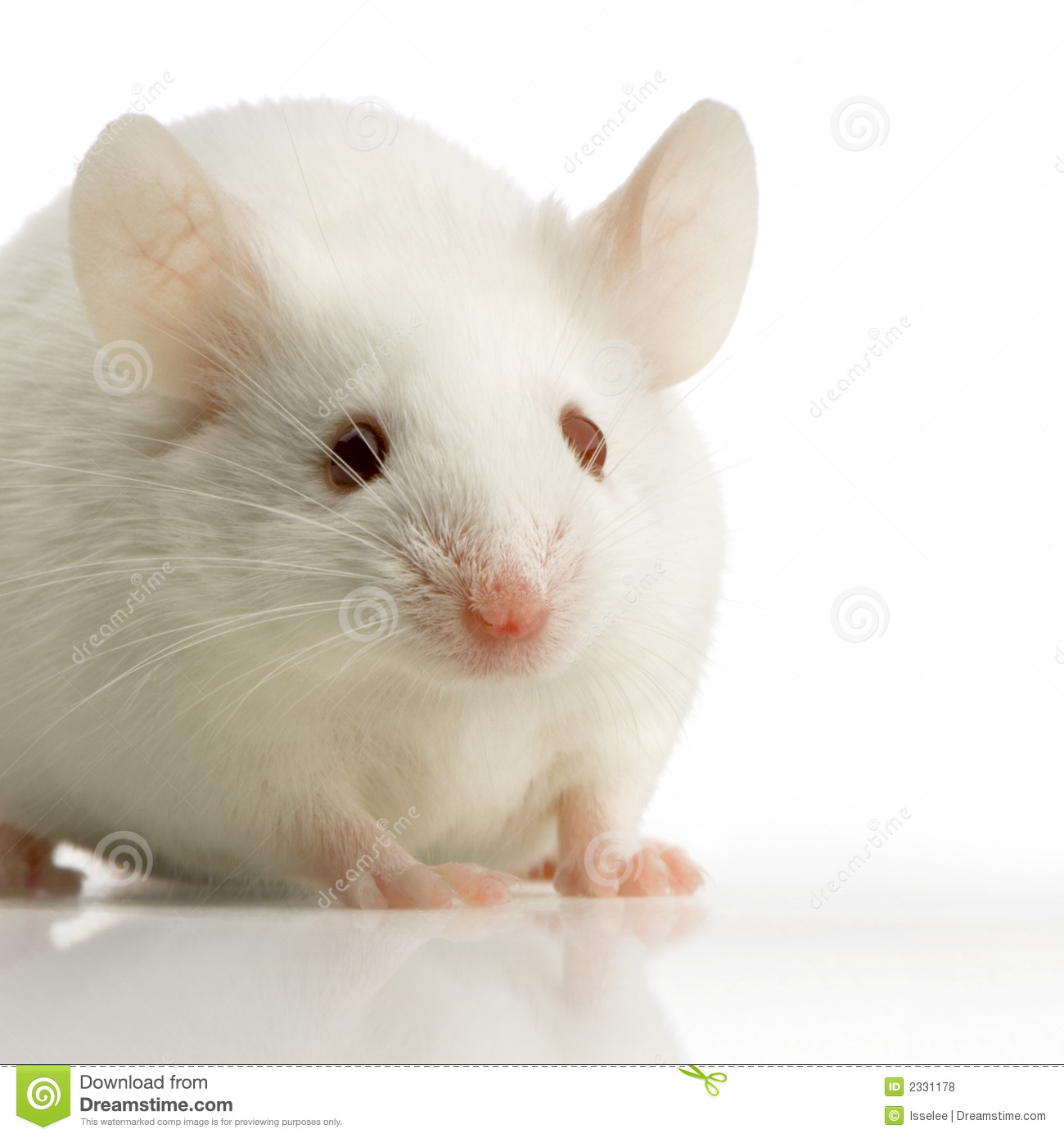 White Mouse Royalty Free Stock Photos - Image: 2331178