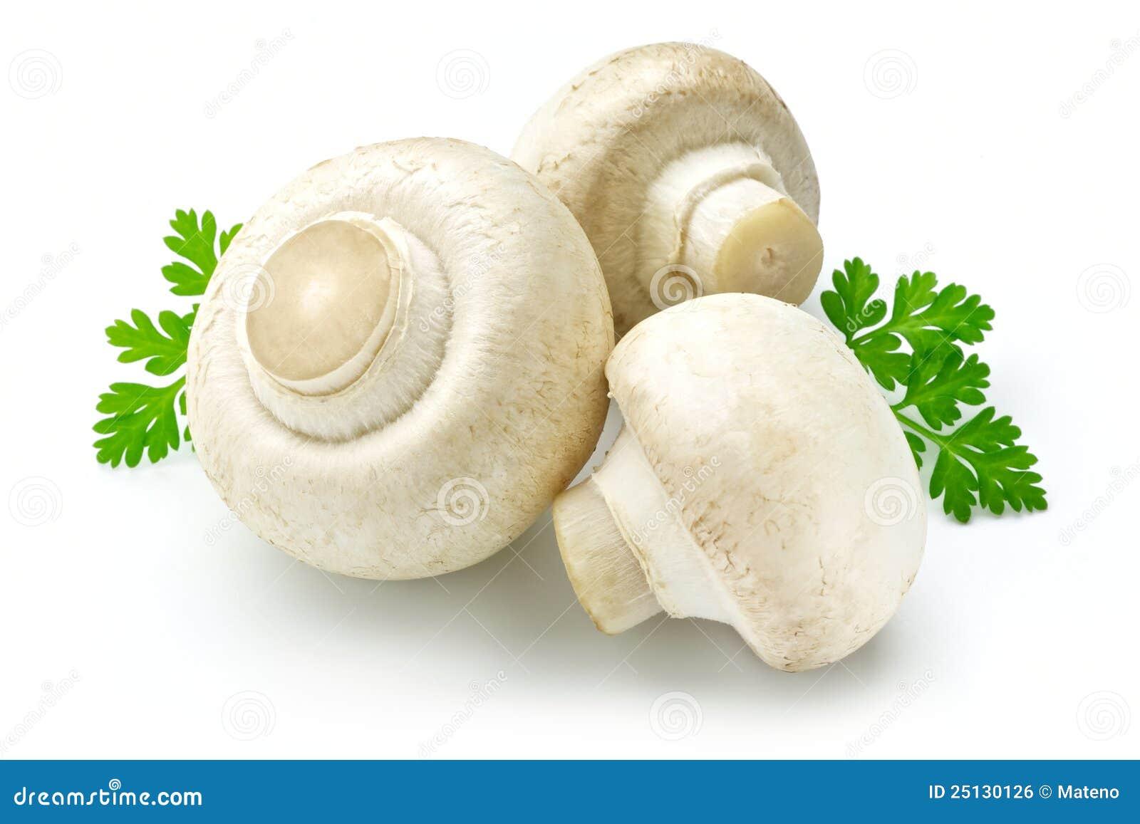 White Mushroom Royalty Free Stock Image - Image: 25130126