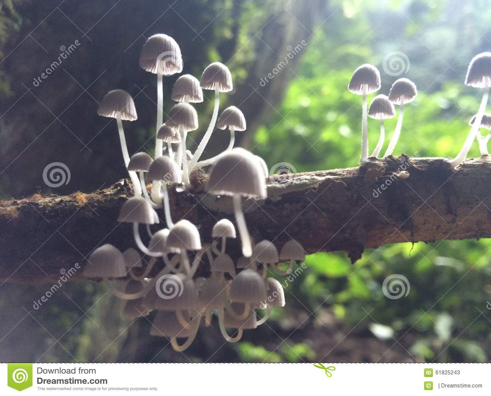 White mushrooms