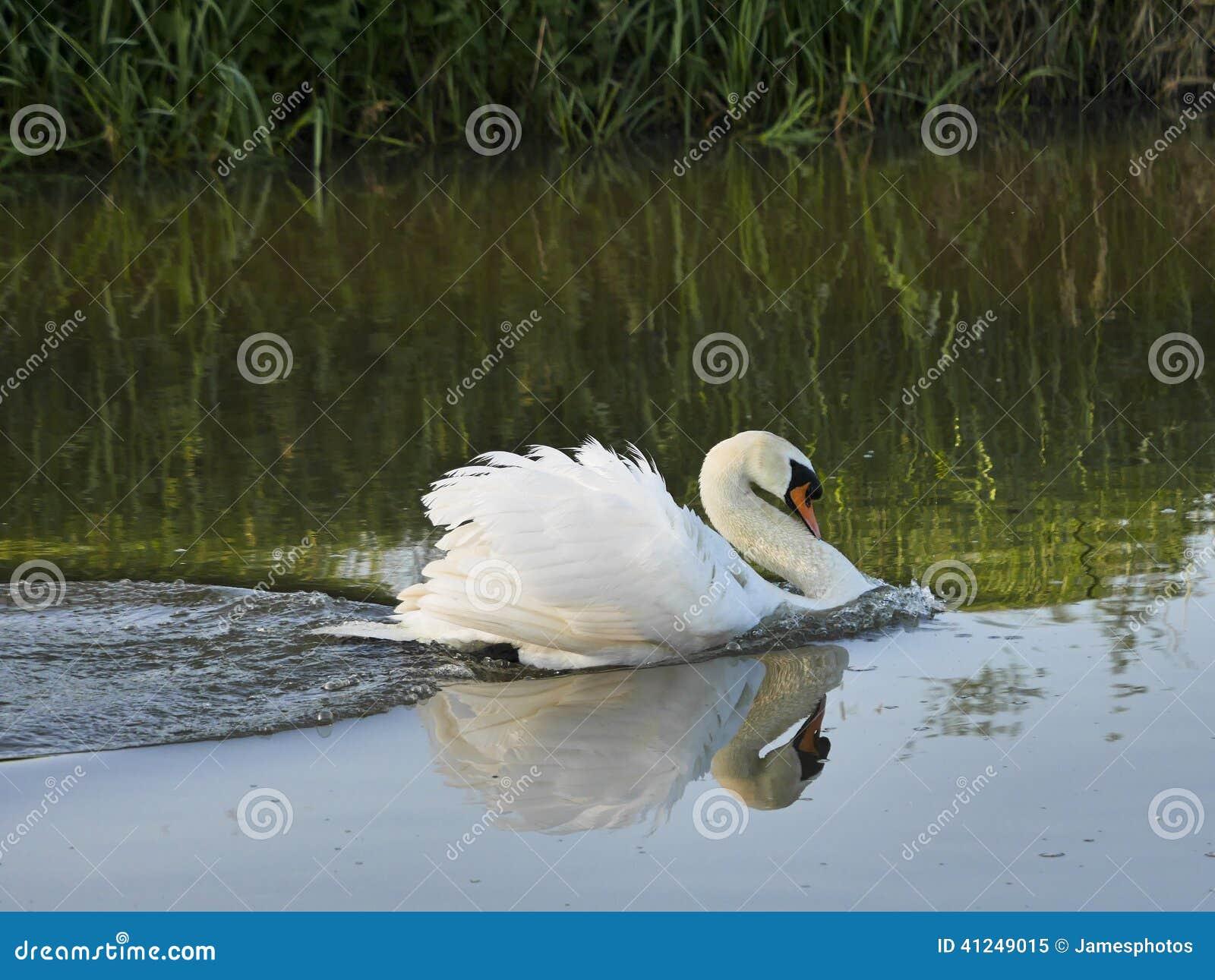 swan river single men Meet single men in swan river mb online & chat in the forums dhu is a 100% free dating site to find single men in swan river.