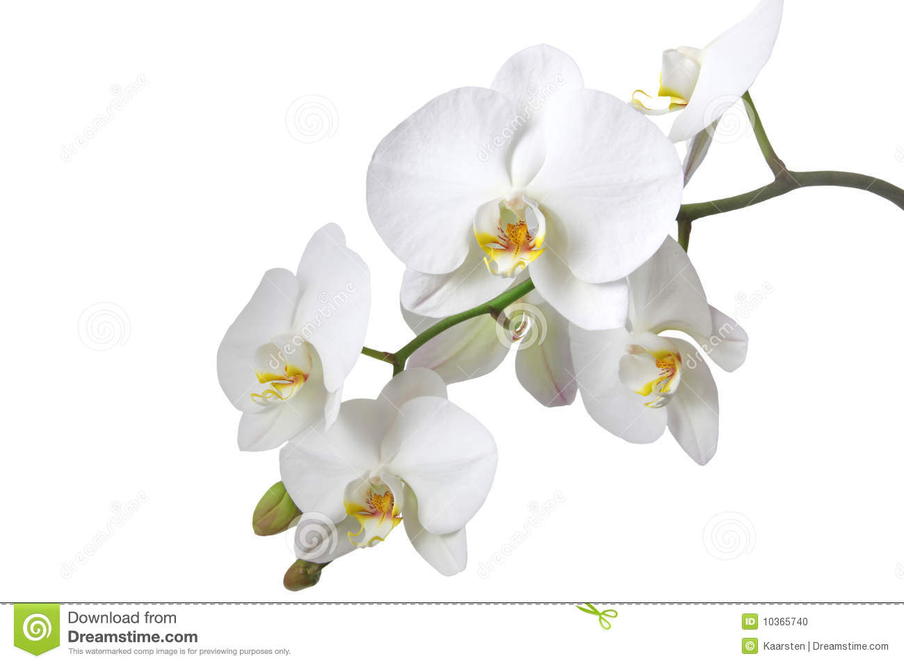 White Orchid Clipart