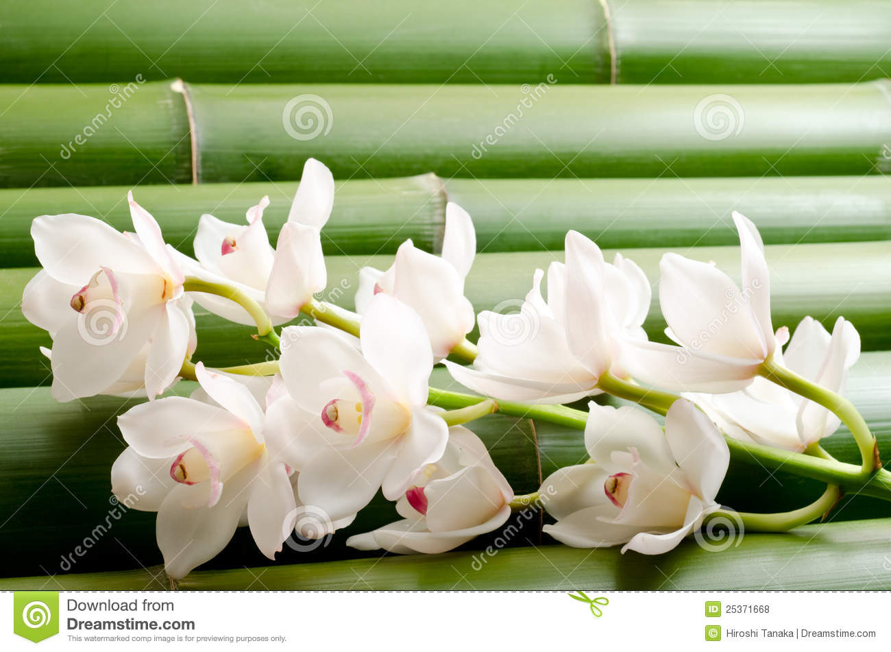 White orchid on bamboo
