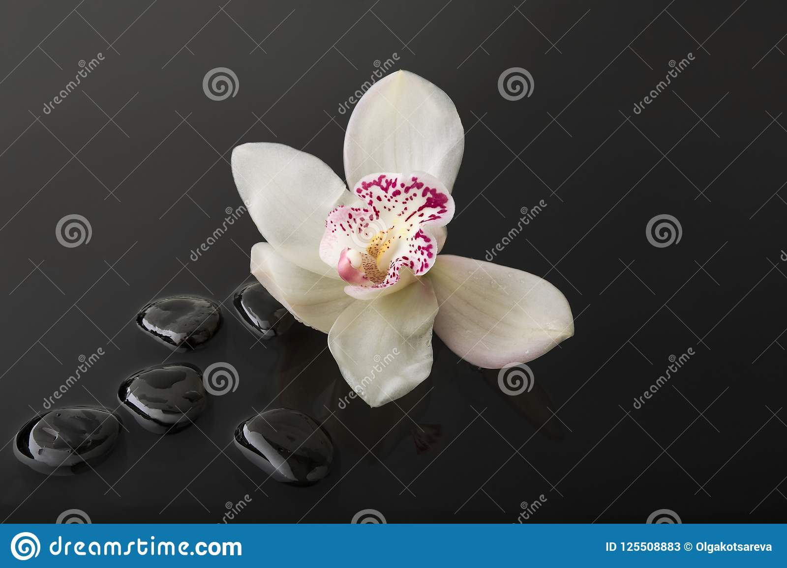 White Orchid With Black Zen Stones In Water With Drops Stock
