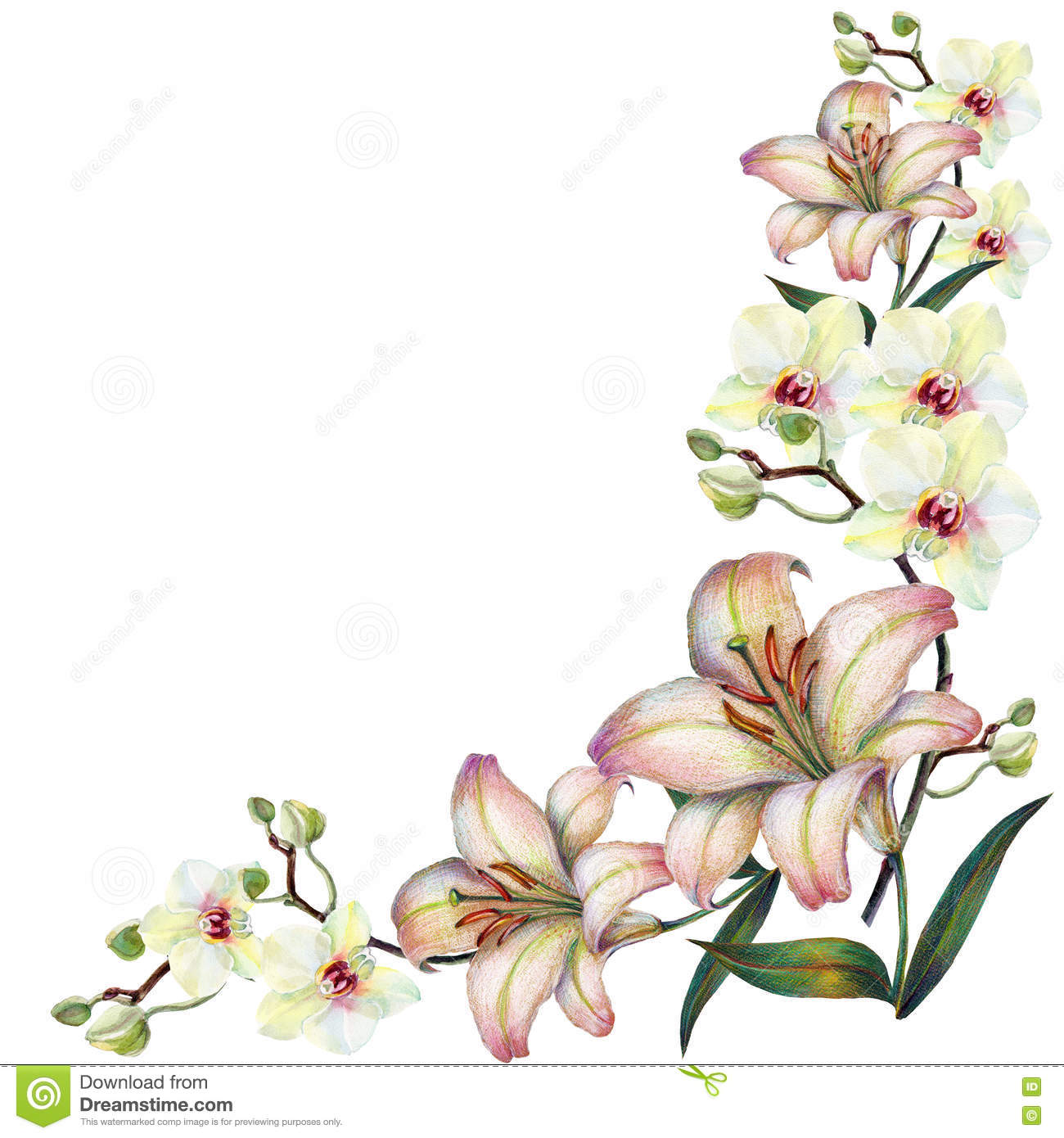 White Orchid Flower On A Branch Lilywatercolor Bouquet