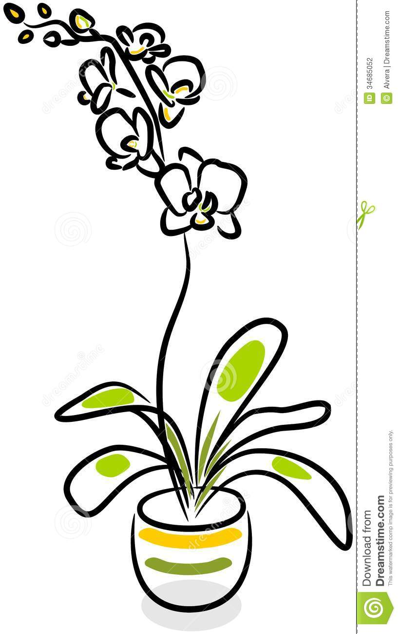 White Orchid Stock Vector Illustration Of Beauty Blossom