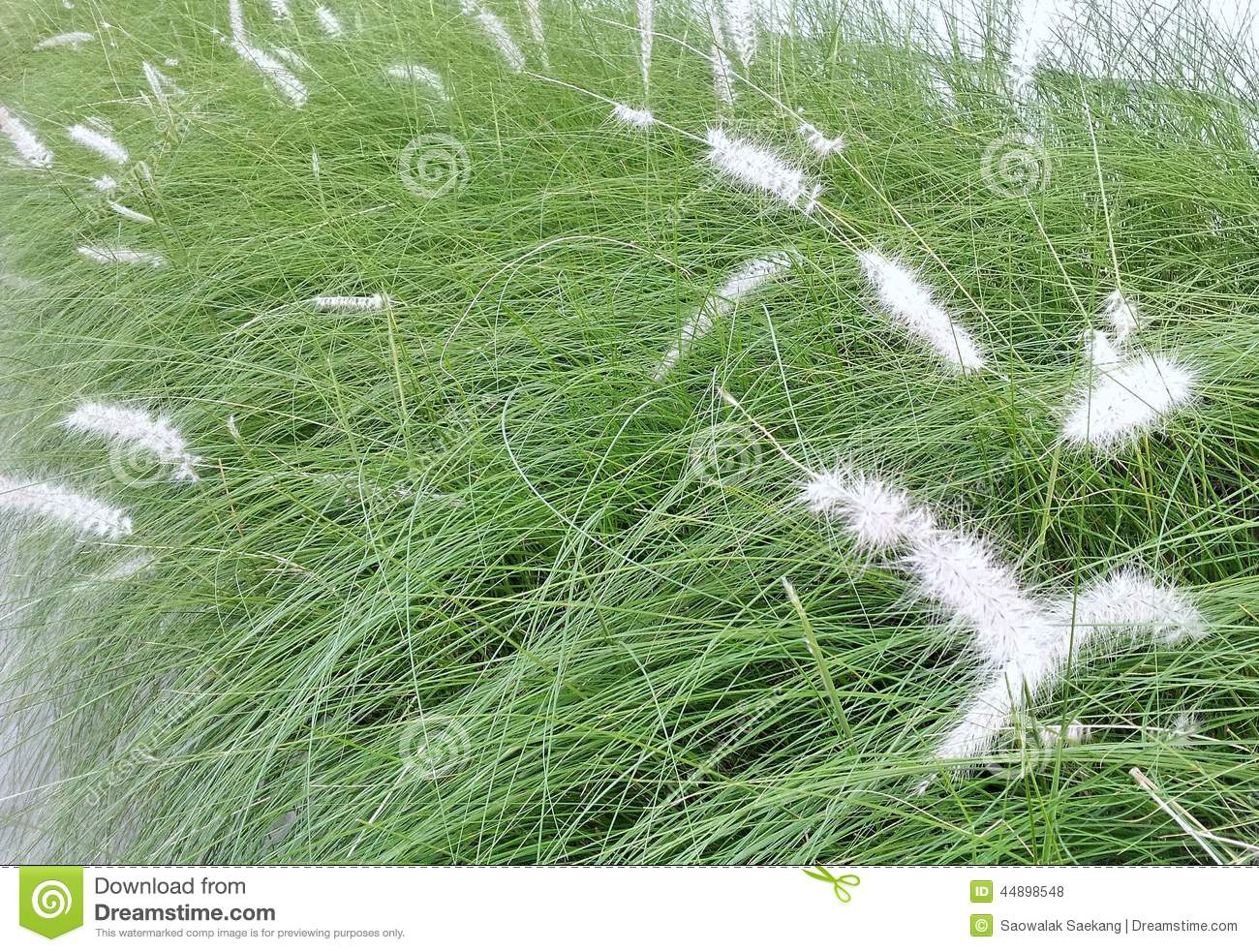 White ornamental flower grasses in the big city stock for White ornamental grass